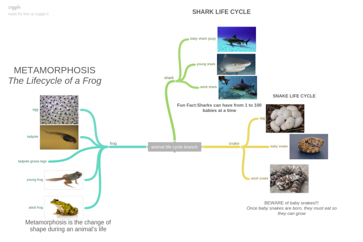00-animal_life_cycle_branch